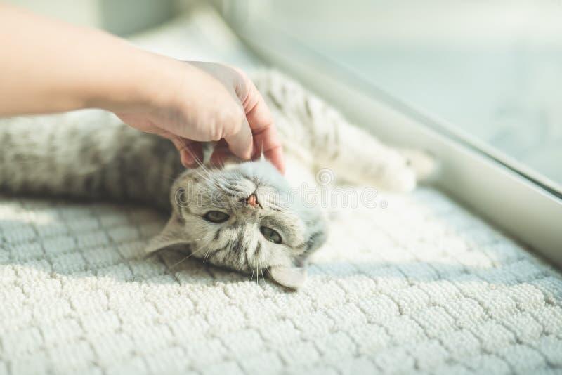使用与小猫的亚裔妇女 免版税库存图片