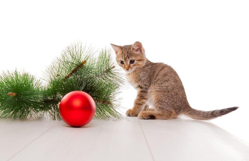 使用与新年球的好奇小猫 库存图片