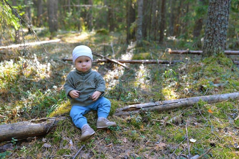 使用与杉木锥体的滑稽的小男孩坐地板 免版税库存照片