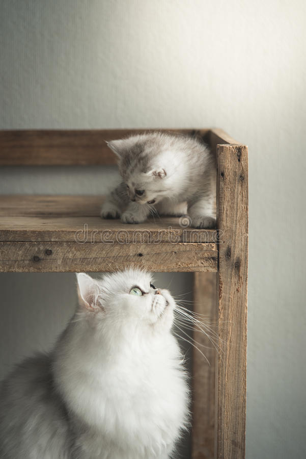 使用与母亲的逗人喜爱的小猫 图库摄影