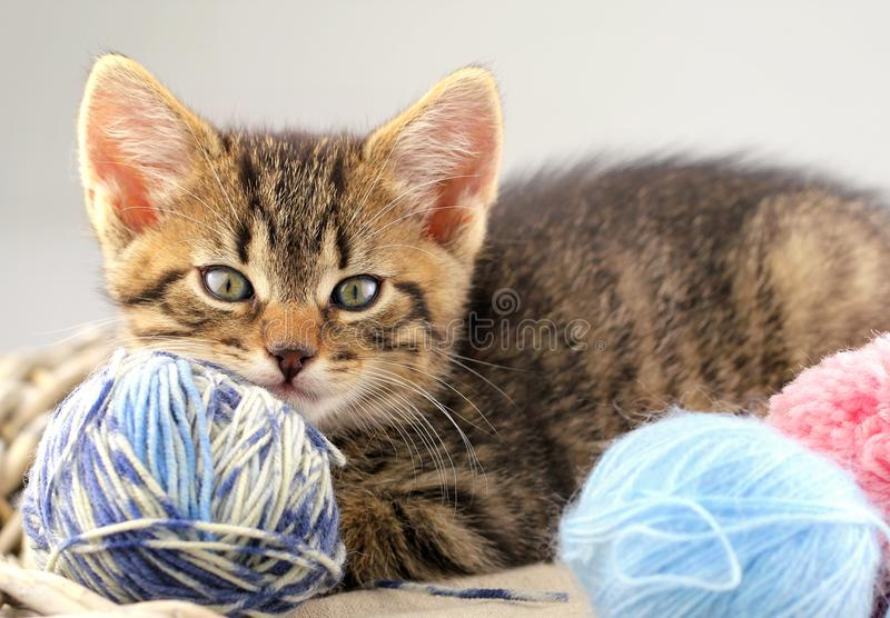 使用与毛线关闭缠结的小猫  免版税库存照片
