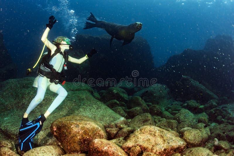 使用与海狮的白肤金发的妇女 库存图片