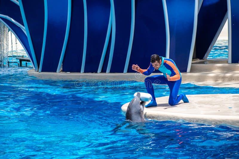 使用与海豚的教练员在海豚天在Seaworld 58显示 免版税库存照片