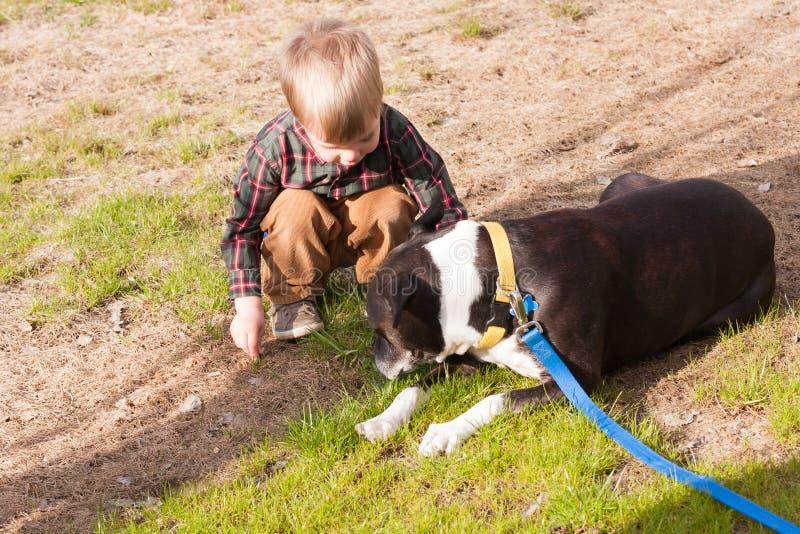 使用与狗的小孩男孩 库存照片
