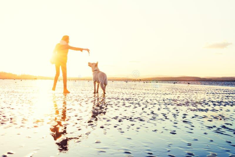 使用与狗的行家女孩在海滩在日落期间,强的透镜火光 免版税库存照片