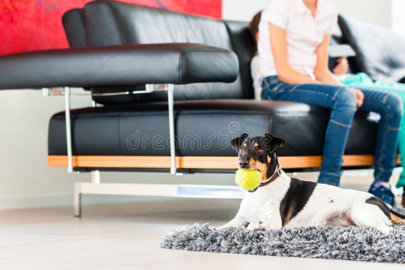 使用与球的家庭狗在客厅 免版税库存图片