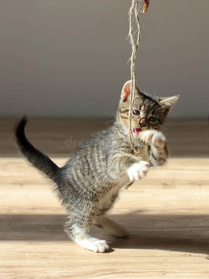 使用与绳索的小的小猫 免版税库存图片