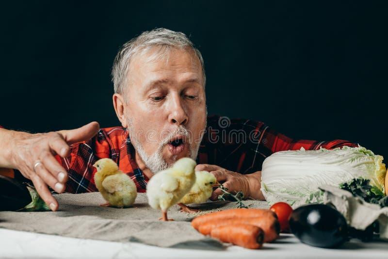 使用与鸡的老情感农夫 免版税库存照片