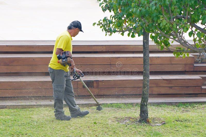 使用切边机的专业花匠在城市parck 年长有草整理者的人工作者割的草坪户外在晴朗 免版税库存图片