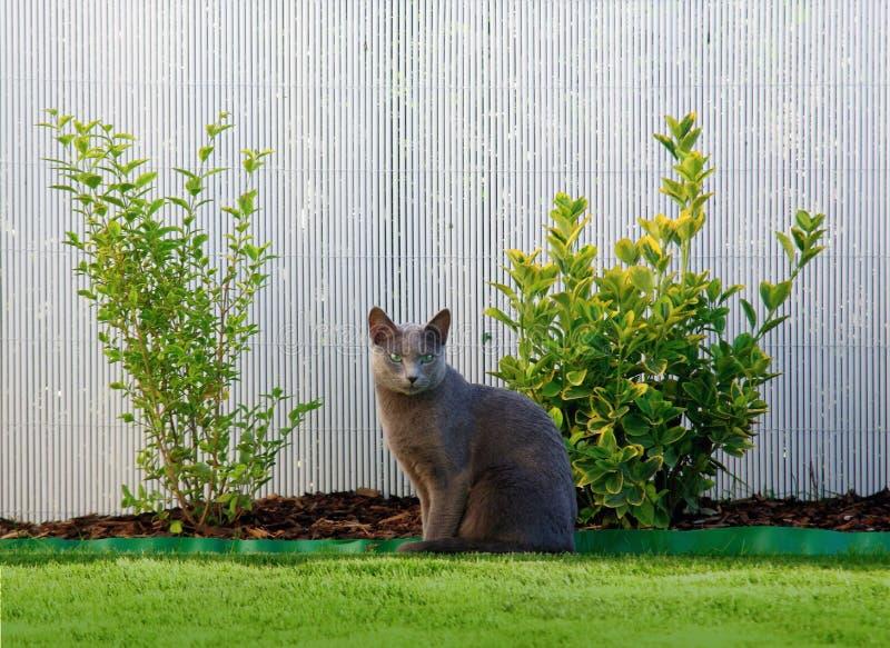 使用可视,蓝色照相机猫设备数字式作用形成不是热图象红外做的设计照片辐射实际开会热自计温度计 库存照片