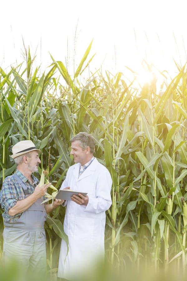 使用在农场时的数字片剂农夫和科学家审查的玉米庄稼,当 免版税库存照片