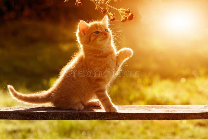 使用在坐bac的一个木板的庭院里的猫/小猫 免版税库存图片