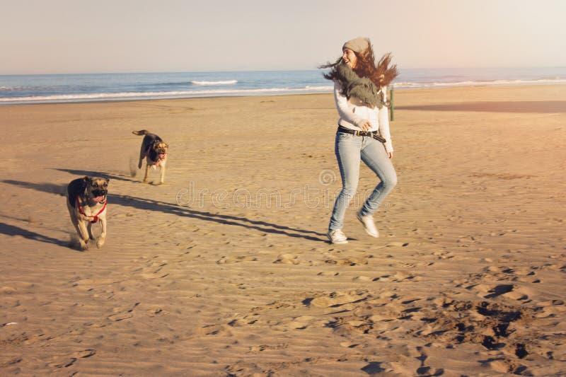 使用在海滩的两个labradors朋友 免版税库存照片