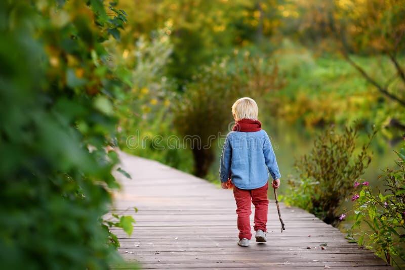 使用在漫步期间的小男孩在森林里 免版税库存照片