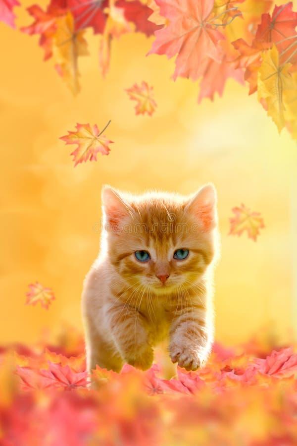使用在秋叶的幼小猫 免版税库存图片