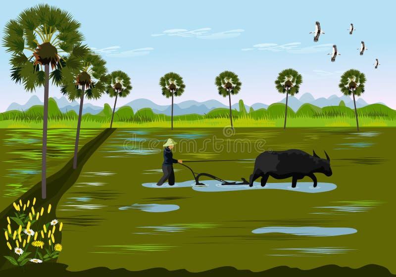使用在米领域的水牛农夫开掘土壤 棕榈树作为背景 库存例证