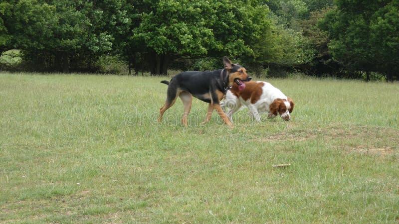 使用在草甸的狗在一个美好的夏日 库存照片