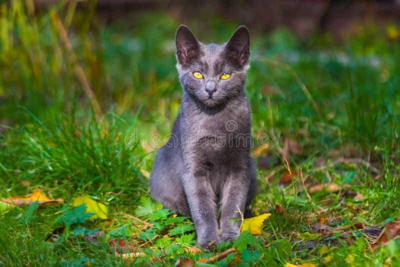使用在草路旁的小的小猫在早晨 免版税库存图片