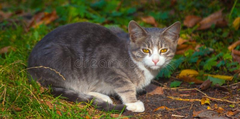 使用在草路旁的小的小猫在早晨 图库摄影