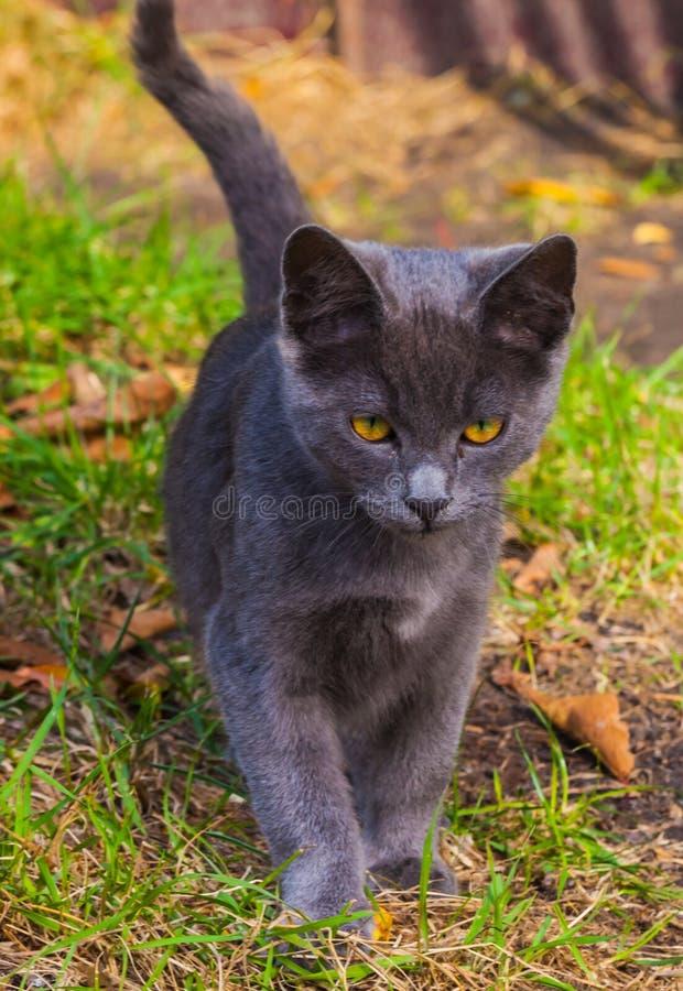 使用在草路旁的小的小猫在早晨 免版税库存照片