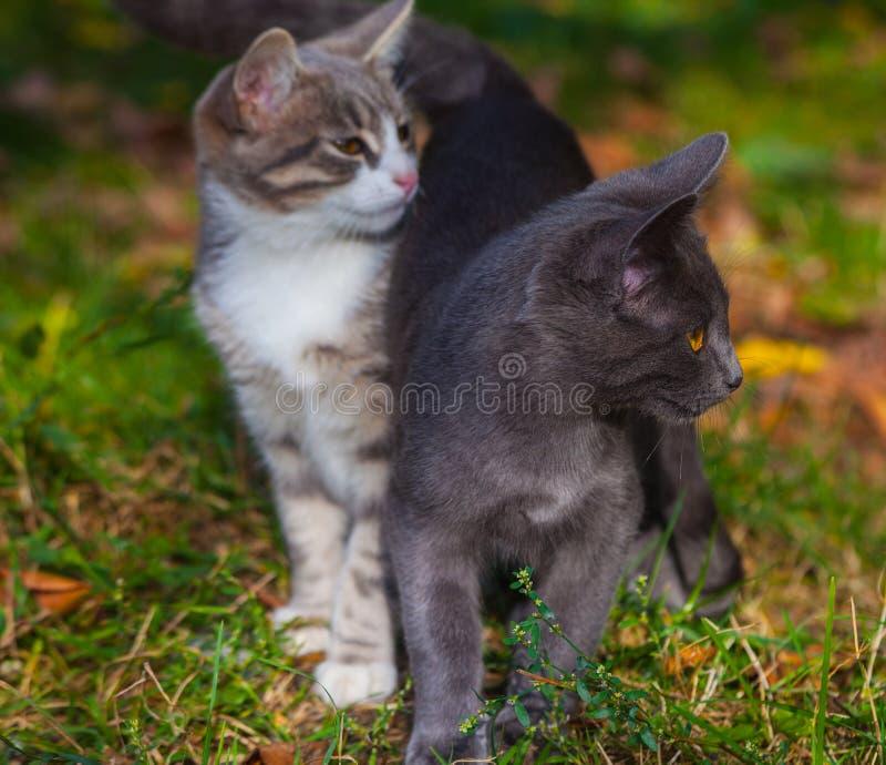 使用在草路旁的小的小猫在早晨 库存照片