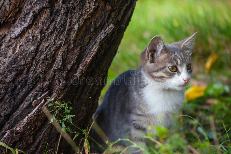 使用在草路旁的小的小猫在早晨 库存图片