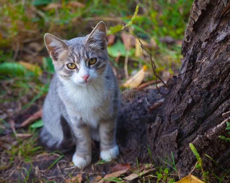 使用在草路旁的小的小猫在早晨 免版税图库摄影