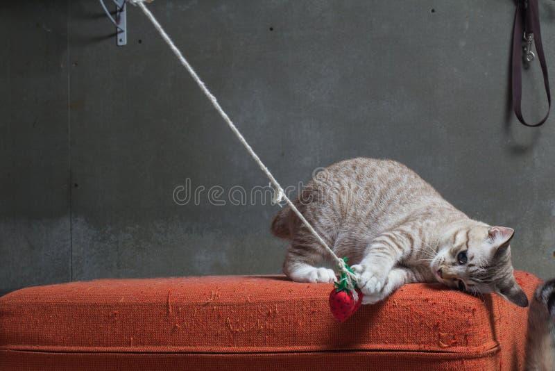 使用在被抓的橙色织品沙发的小猫 免版税库存照片