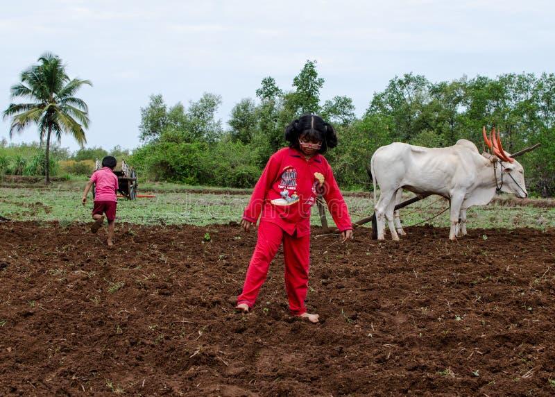 使用在被耕的领域的村庄孩子 库存照片