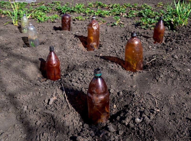 使用塑料瓶保护幼木在他们的夏天村庄 免版税库存图片