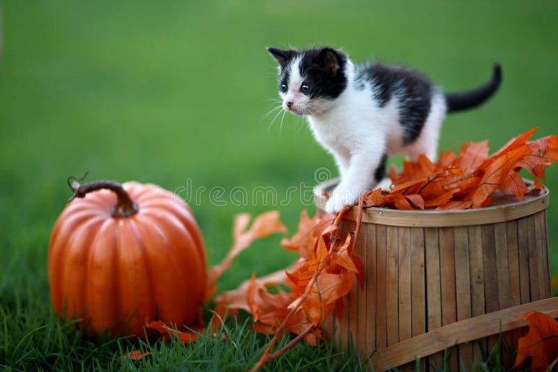 Download 使用户外在草的小小猫 库存照片. 图片 包括有 宠物, 拥抱, 镶边, 讨人喜欢, 乐趣, 前面, 纵向 - 30329294