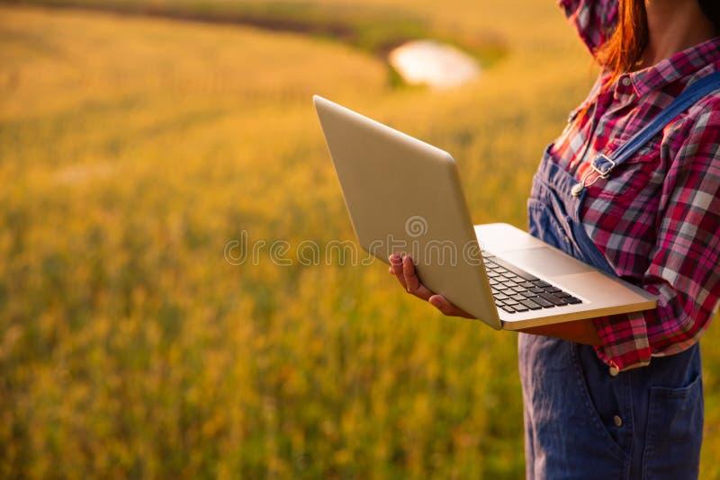 使用手提电脑的女性农夫在金麦子庄稼领域,现代聪明种田的概念通过使用电子 免版税库存照片