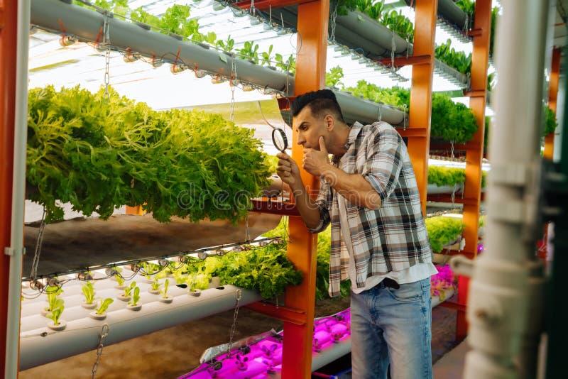 使用放大镜的深色头发的农业学家看绿色 免版税库存照片