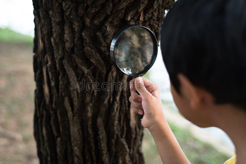 使用放大镜,年轻亚裔男孩审查树皮 免版税库存照片