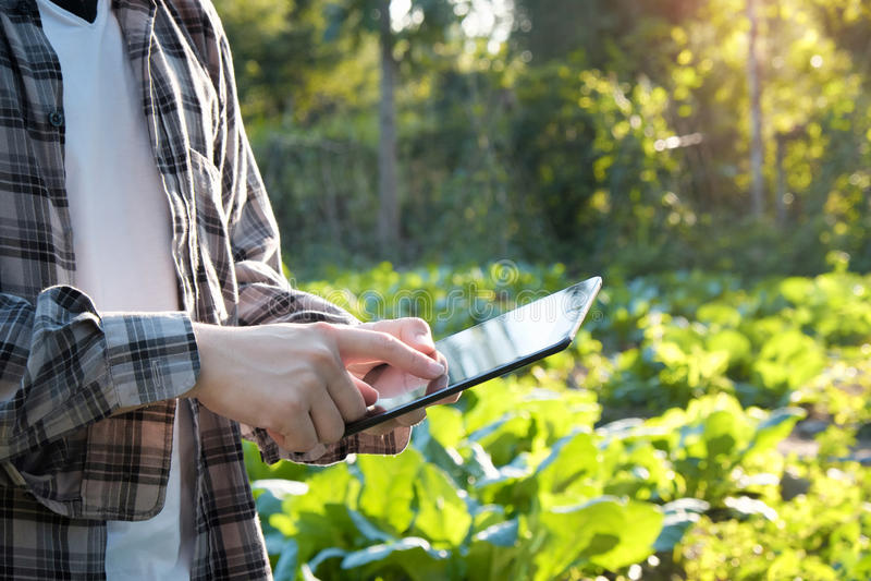 使用数字式片剂计算机的农夫在培养的农业F 免版税库存图片