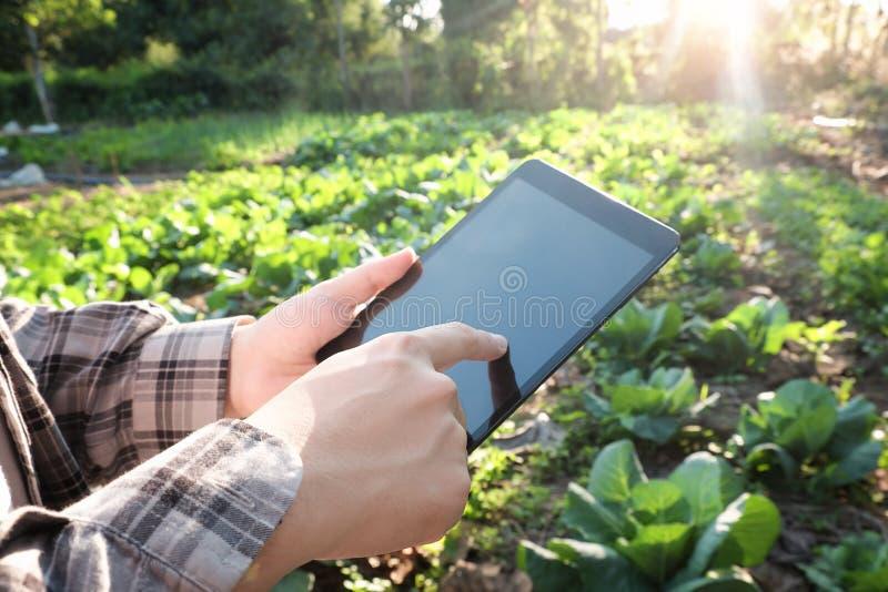 使用数字式片剂计算机的农夫在培养的农业F 免版税库存照片