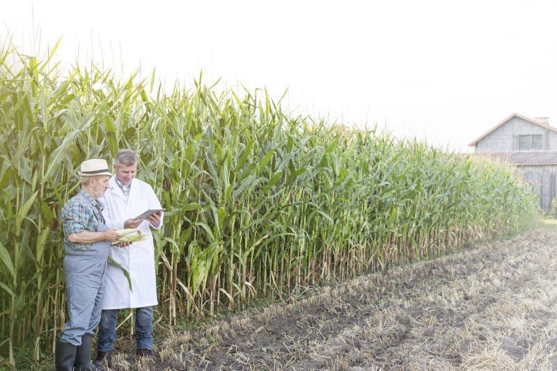 使用数字片剂的农夫和科学家,当审查玉米庄稼在农场时 免版税库存照片
