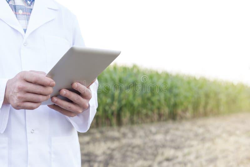 使用数字片剂的成熟科学家的中央部位在农场 库存图片