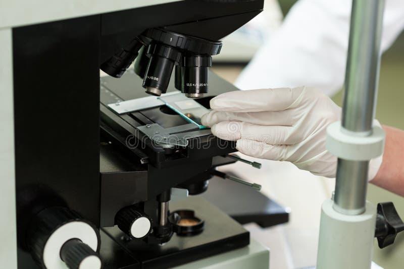 使用显微镜在微生物学实验室 图库摄影