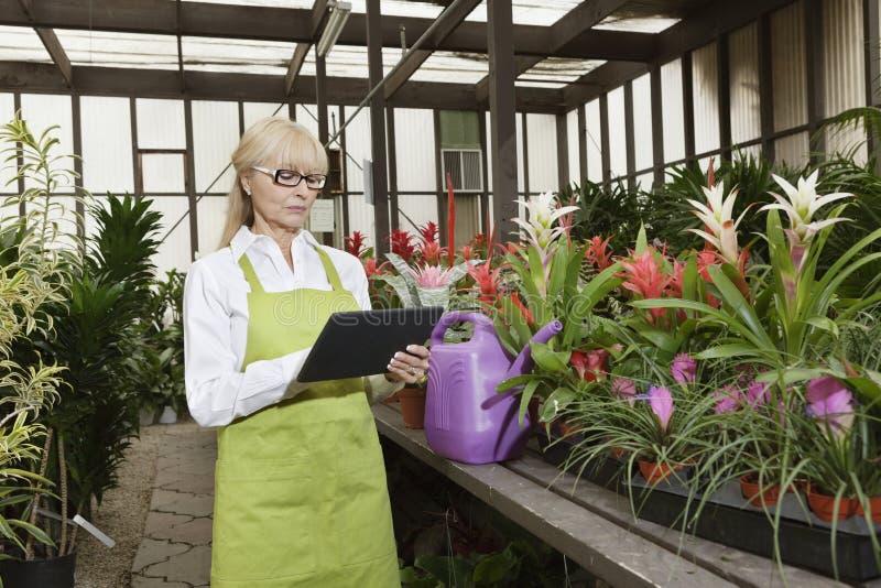 使用片剂个人计算机的资深卖花人在温室 免版税图库摄影
