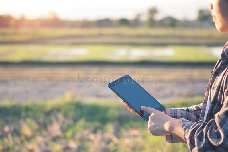 使用片剂的农艺师为在农业领域读了一个报告 库存照片
