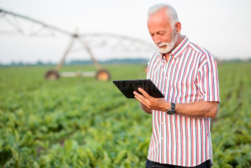 使用片剂的愉快和满意的资深农艺师或农夫在大豆领域 免版税库存照片
