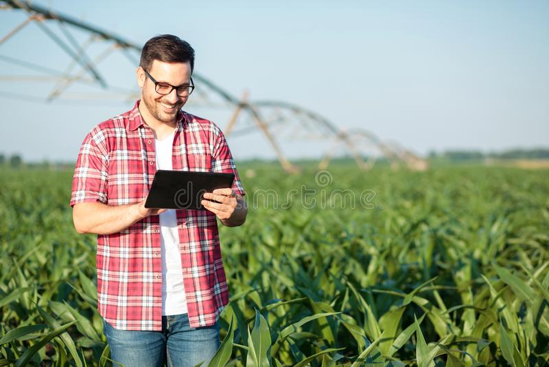 使用片剂的愉快的年轻农夫或农艺师在麦地 灌溉系统在背景中 免版税库存照片