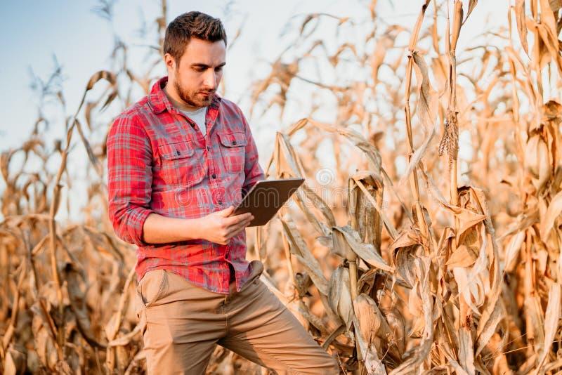 使用片剂的英俊的农夫为收获庄稼 农场设备和技术 库存图片