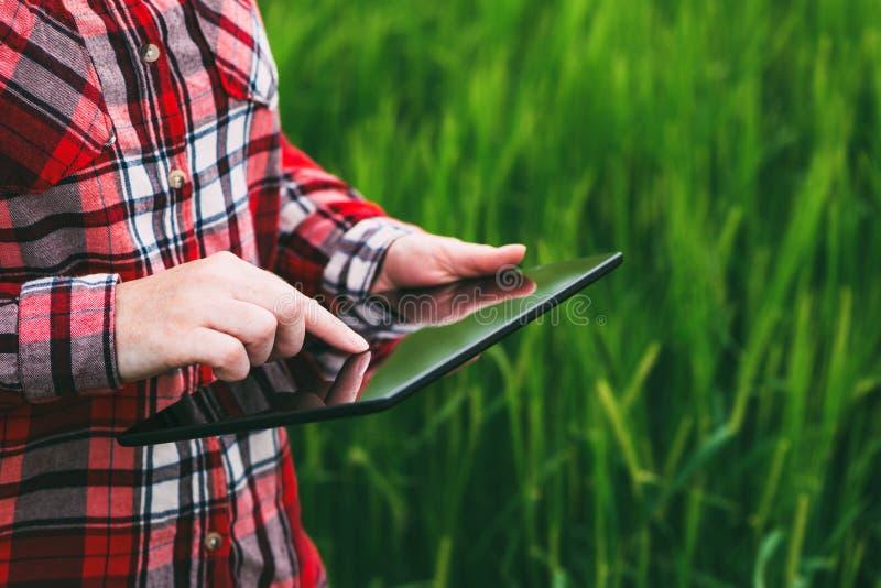使用片剂计算机的女性农夫在麦子庄稼领域 图库摄影