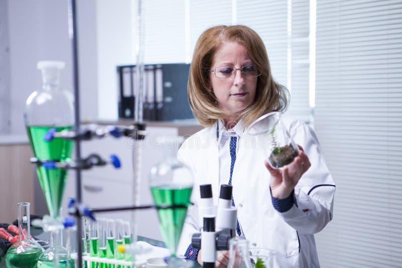 使用现代技术的女性科学家为农业科学测试 免版税图库摄影