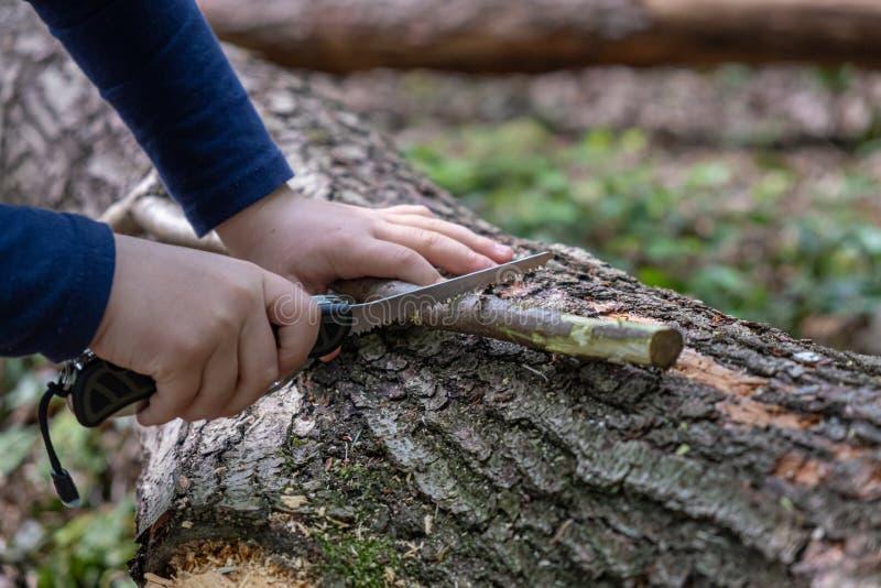 使用瑞士刀子的女孩或男孩的手,锯一块木头在森林,没人 免版税库存图片