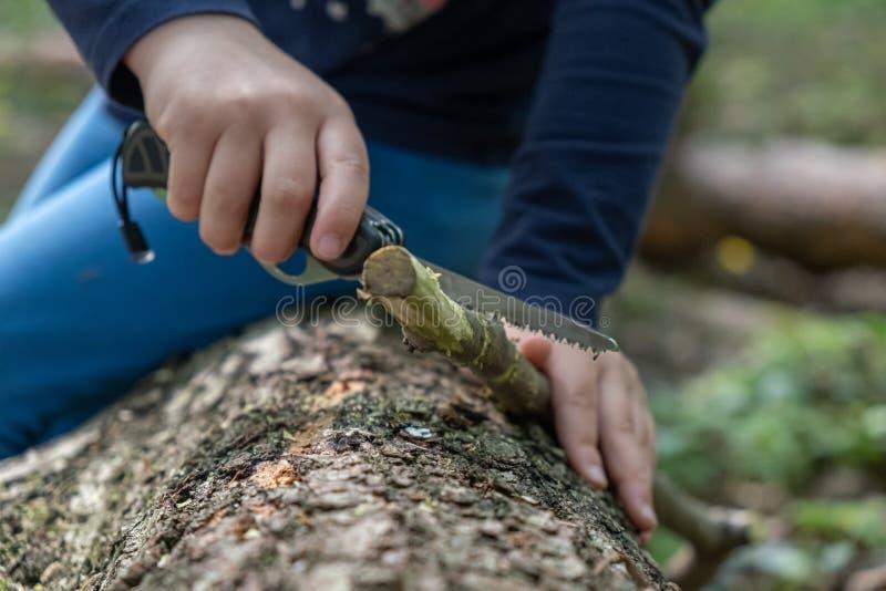 使用瑞士刀子的女孩或男孩的手,锯一块木头在森林,没人 图库摄影