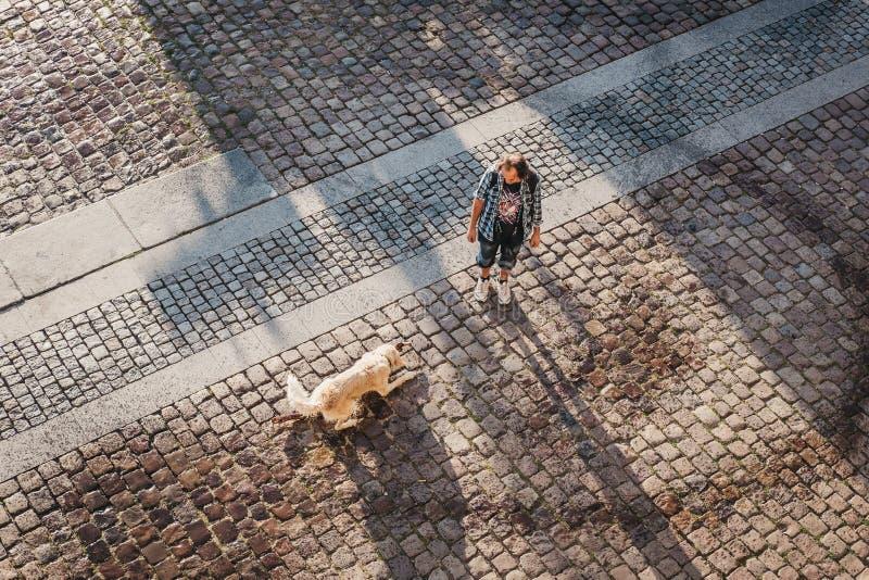 使用用棍子的湿狗拿来从伏尔塔瓦河河在布拉格,捷克 库存照片