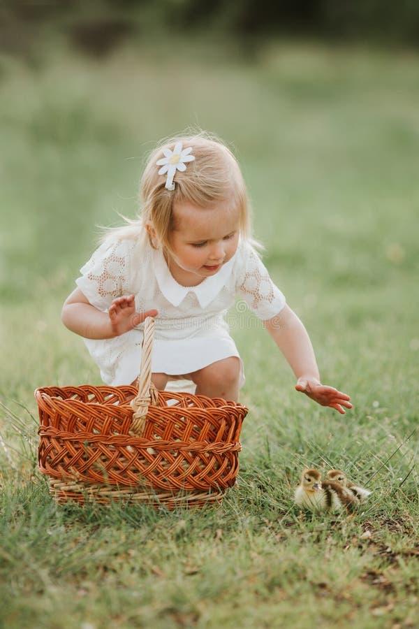 使用用鸭子的小女孩 日落的女孩用可爱的鸭子 孩子的概念有动物的 库存照片